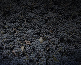 Background-moises-wines-website-vineyard-oregon-new-orleans-grapes