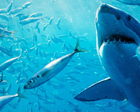 Background-discovery-channel-ocean-fishes-and-shark